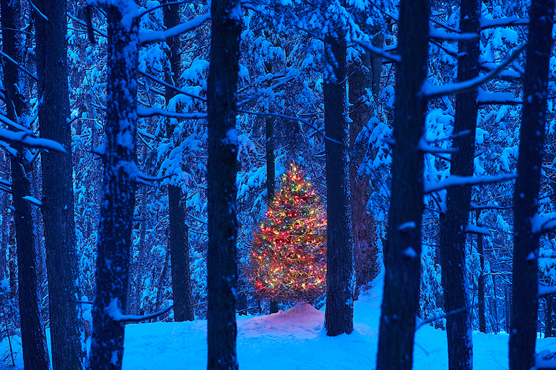 Christmas Tree Lit in Woods